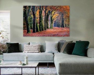 Herfst bos van Herman van Alfen