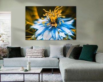 Blume1 von Wim de Vos