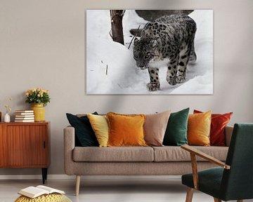 Der Schneeleopard schleicht sich auf dem Weg nach oben, von Michael Semenov