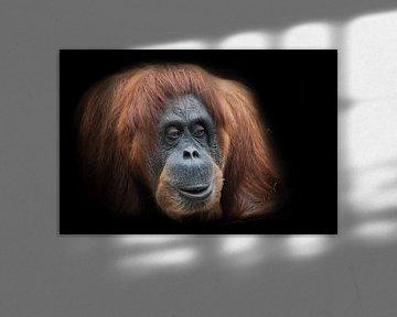 Überraschung. Gesicht eines intelligenten Orang-Utans rund von Michael Semenov