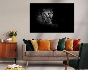 Un fier et beau chat prédateur est assis dans l'obscurité. Chat dans la forêt de nuit, fond noir. Ph sur Michael Semenov
