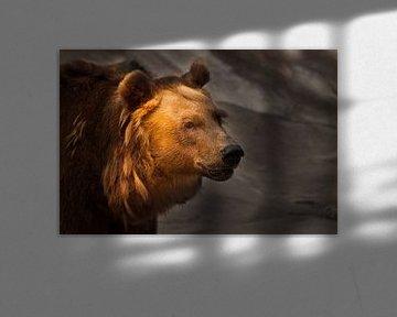 Beest op een donkere achtergrond, verlicht door de zon. Berengezicht van Michael Semenov
