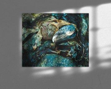 Zeeländische Pracht von Theo Radings