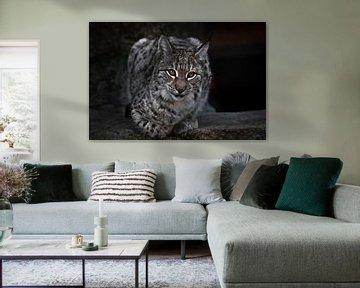 Ein Luchs auf einem dunklen Plan sitzt und schaut ironisch. Die Großkatze ist streng und schön. von Michael Semenov