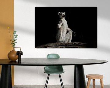 Katzen-Lemur-Meditation mit leuchtenden, klaren Augen im Dunkeln. Ein flauschiger Affe sitzt auf ein von Michael Semenov