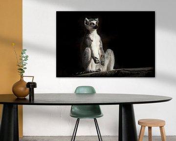 ring-tailed lemur in de donkere zwarte achtergrond zit alsof hij bezig is met spirituele prakiki (me van Michael Semenov