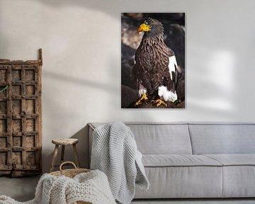 Riesiger See- oder Seeadler mit blutigem Schnabel von Michael Semenov