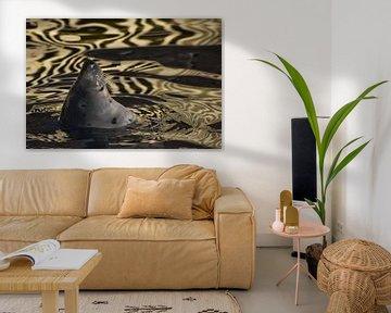 Das Gesicht einer zufriedenen Ostsee-Robbe lehnt sich aus goldenem Wasser, dessen Textur an Samt eri von Michael Semenov