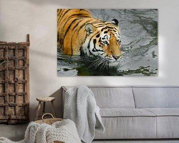 Tigerkopf im dunklen Wasser. Junger schöner Tiger mit ausdrucksvollen Augen geht auf dem Wasser (bad von Michael Semenov