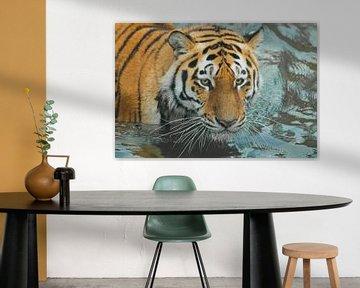 Harscher, kräftiger Tigerkopf. Junger schöner Tiger mit ausdrucksvollen Augen geht auf dem Wasser (b von Michael Semenov