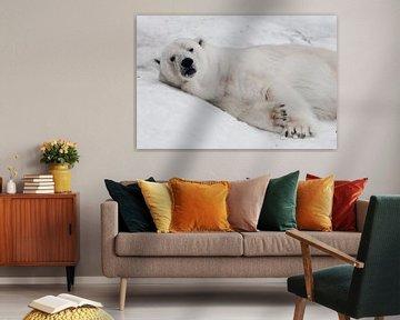 liegt entspannt. Mächtiger Raubtier-Eisbär liegt im Schnee, Nahaufnahme von Michael Semenov