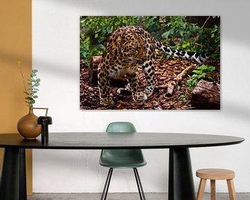 Ein gut getarnter (Camouflage) fernöstlicher Leopard ist im Wald praktisch unsichtbar, ein buntes Ti von Michael Semenov