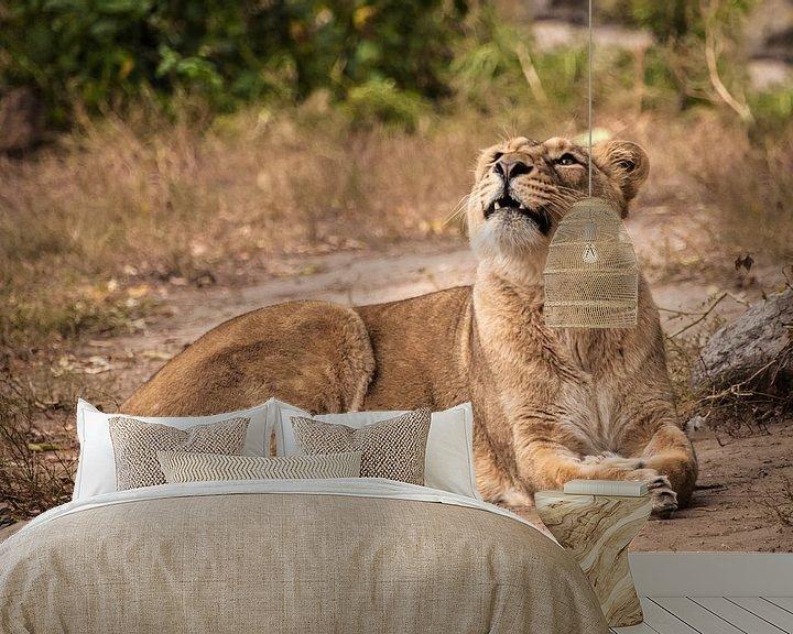 Sfeerimpressie behang: Trots ligt op de grond in een struik. Leeuwin vrouwtje is een grote roofzuchtige sterke en mooie Afr van Michael Semenov