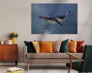 Der fette, aber schlanke Pinguin schwimmt gezielt im blauen Wasser (in der Wassersäule), unter dem g von Michael Semenov