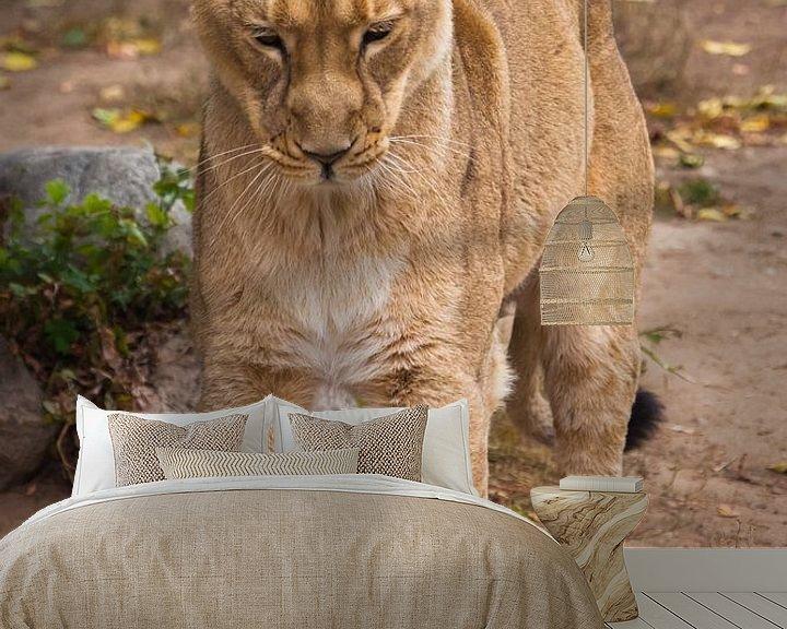 Sfeerimpressie behang: Strekt, staat op zijn achterpoten als een kat zijn rug opheft Leeuwinnetje is een grote roofzuchtige van Michael Semenov
