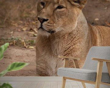 Leeuwin vrouwtje is een grote roofzuchtige sterke en mooie Afrikaanse kat. van Michael Semenov