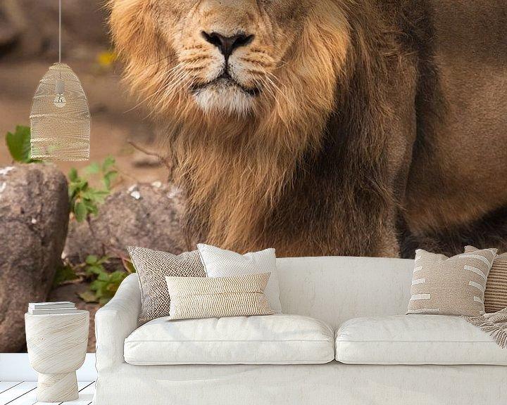 Sfeerimpressie behang: De leeuwenkater is een grote roofzuchtige sterke en mooie kat met een prachtige manen van haar. van Michael Semenov