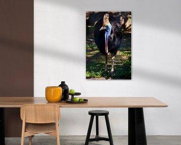 Nahaufnahme Cazuar-Vogel, ein großer Vogel, ein Strauß aus einer Neuguinea und Australien, helle Fär von Michael Semenov