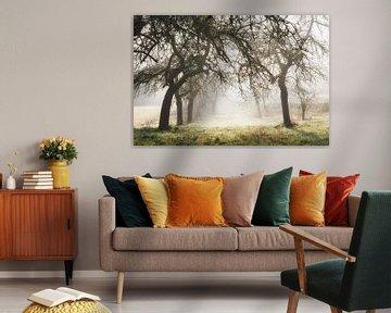 Fruitbomen met zonnestralen van Tobias Luxberg