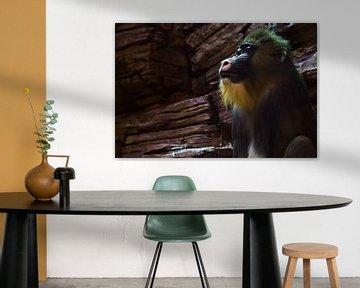 Madrill-Affe mit blauem Gesicht und goldenen Haaren auf dem Hintergrund von Steinen, die einem Pavia von Michael Semenov