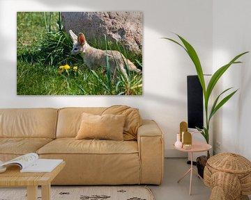 Süßer verlassener Fuchs Fenech (Exupery-Roman, kleiner Prinz) auf dem grünen Gras. von Michael Semenov