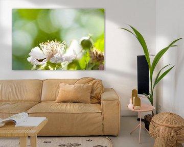 Witte bloem von Kees-Jan Pieper
