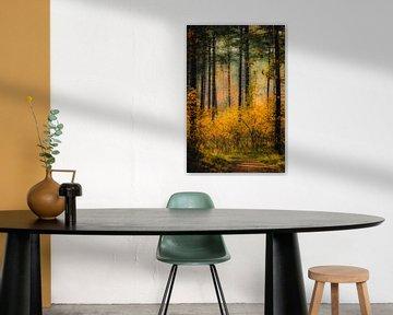Wandelpad door kleurrijk bos in Westenschouwen van Michel Seelen