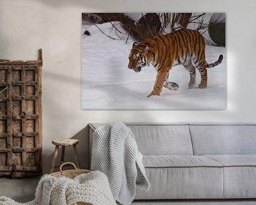 Le puissant tigre de l'Amour s'en va dans la neige blanche et profonde, la nature de l'Extrême-Orien sur Michael Semenov