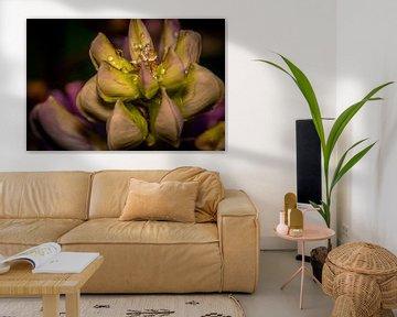 Blume mit Wassertröpfchen von Myra van Heeringen