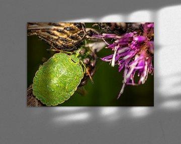 Grüner Käfer mit rosa Disteln von Myra van Heeringen