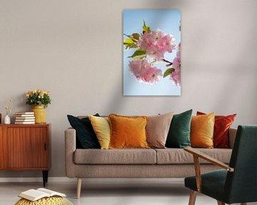 Rosafarbene Blüte vor blauem Himmel von Evelien Oerlemans