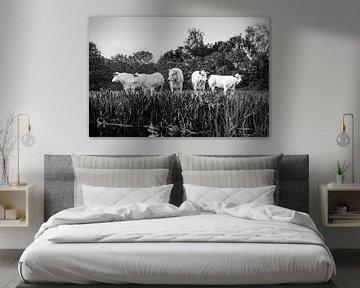 Vijf koeien op een rijtje in zwart-wit van Evelien Oerlemans