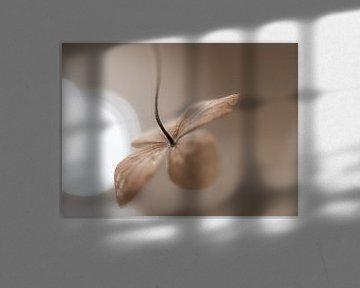 sepia hortensiablaadje van Tania Perneel