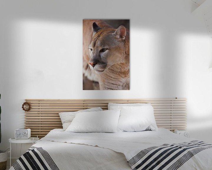 Beispiel: Schnauze des Pumas aus nächster Nähe, orange-gelbe Großkatze, von Michael Semenov