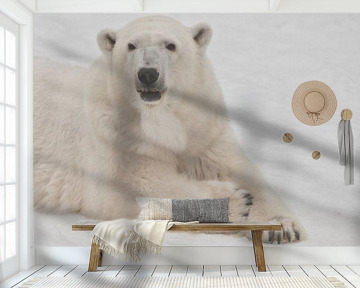 Beispiel fototapete: Die Schnauze eines weißen Eisbären aus nächster Nähe. Ein Eisbär auf Schnee ist ein mächtiges nordis von Michael Semenov