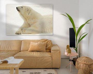 Porträt einer Polarbestie. Nahaufnahme. Schöner und zufriedener arktischer Eisbär im Winter gegen de von Michael Semenov