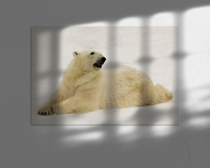 Beispiel: Ein schöner und zufriedener großer arktischer Eisbär ruht (liegt) im Winter im Schnee. von Michael Semenov