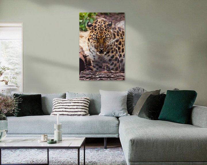 Beispiel: Schnauze eines schönen fernöstlichen Leoparden in Nahaufnahme vor dem Hintergrund von Waldabfall und von Michael Semenov