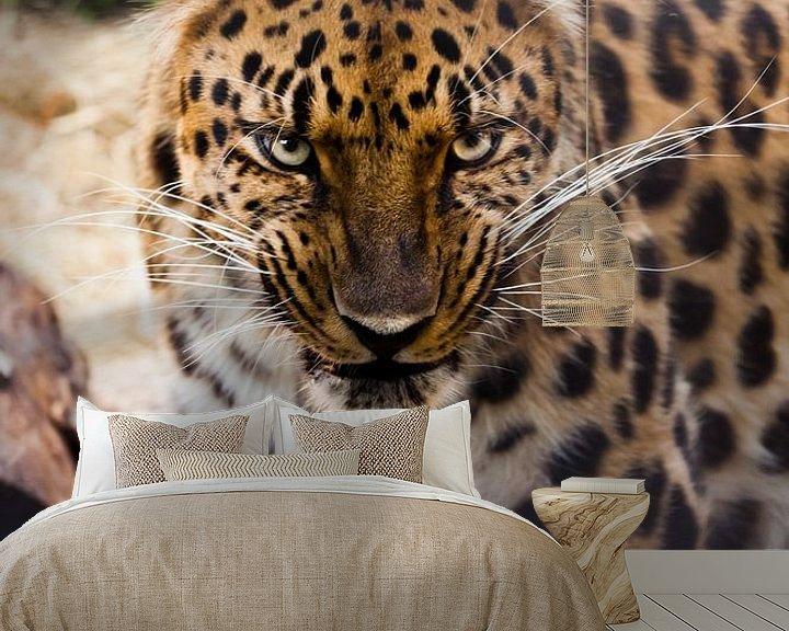 Beispiel fototapete: Schnauze eines schönen fernöstlichen Leoparden in Nahaufnahme vor dem Hintergrund von Waldabfall und von Michael Semenov
