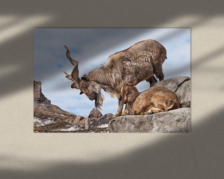 Beispiel: Bergziege mit großen Hörnern (Markhur) steht auf einem Felsen, zu ihren Füßen ein junges Ziegenweibc von Michael Semenov