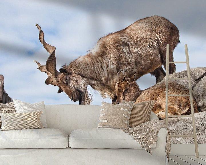 Beispiel fototapete: Bergziege mit großen Hörnern (Markhur) steht auf einem Felsen, zu ihren Füßen ein junges Ziegenweibc von Michael Semenov