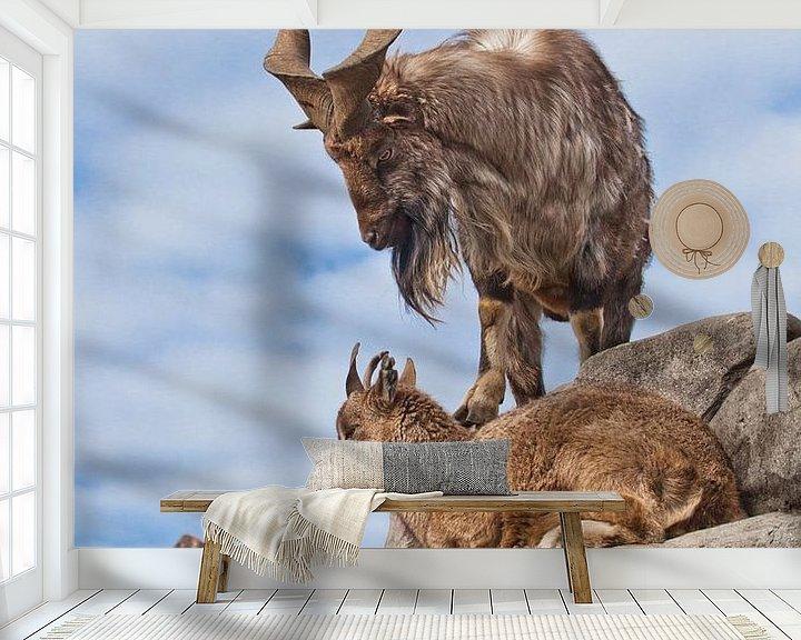 Beispiel fototapete: Bergziege mit großen Hörnern steht auf einem Felsen, zu ihren Füßen ist ein junges Ziegenweibchen, b von Michael Semenov
