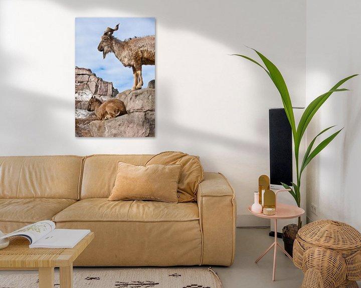 Beispiel: Bergziege mit großen Hörnern steht auf einem Felsen, zu ihren Füßen ist ein junges Ziegenweibchen, b von Michael Semenov