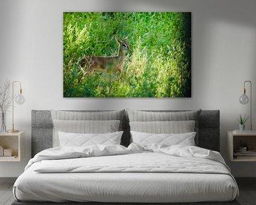 Stolz und erleuchtet. Kirk's Dik-Dik - ist eine kleine, in Ostafrika heimische Antilope auf grünem H von Michael Semenov