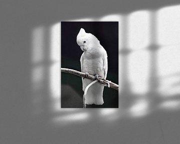 Ein großer trauriger weißer Papagei mit einem Büschel sitzt auf einem Ast vor einem dunklen Hintergr von Michael Semenov