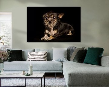 Aufmerksamer Mischlingshund von Günter Albers