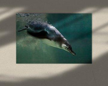 Ein cleverer Pinguin schwimmt in türkisfarbenem Wasser mit vielen Blasen, ein antarktischer Vogel im von Michael Semenov