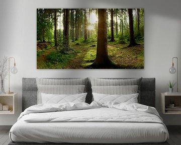 Un beau lever de soleil dans la forêt sur Günter Albers