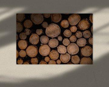 boomstammen van Tom Knotter