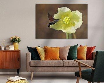 Kolibri-Schmetterling von Babette van den Berg